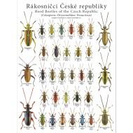 PL03 - Rákosníčci České republiky (Coleoptera: Chrysomelidae: Donaciinae)
