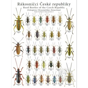 http://www.entosphinx.cz/1258-3965-thickbox/pl03-reed-beetles-of-the-czech-republic-coleoptera-chrysomelidae-donaciinae.jpg