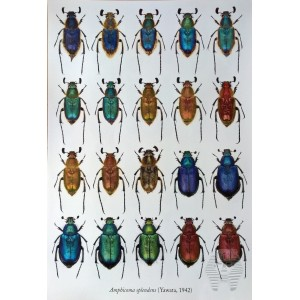 http://www.entosphinx.cz/1347-4350-thickbox/pl03-reed-beetles-of-the-czech-republic-coleoptera-chrysomelidae-donaciinae.jpg