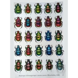http://www.entosphinx.cz/1348-4353-thickbox/pl03-reed-beetles-of-the-czech-republic-coleoptera-chrysomelidae-donaciinae.jpg