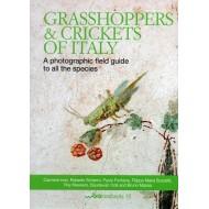 Carmine I.,: Grasshoppers