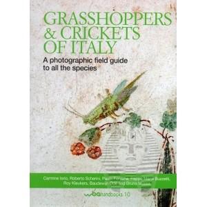 http://www.entosphinx.cz/1534-5145-thickbox/carmine-i-grasshoppers.jpg
