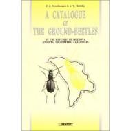 Neculiseanu, Matalin A Catalogue of the Ground-beetles of the Republic of Moldova (insecta, Coleoptera: Carabidae)