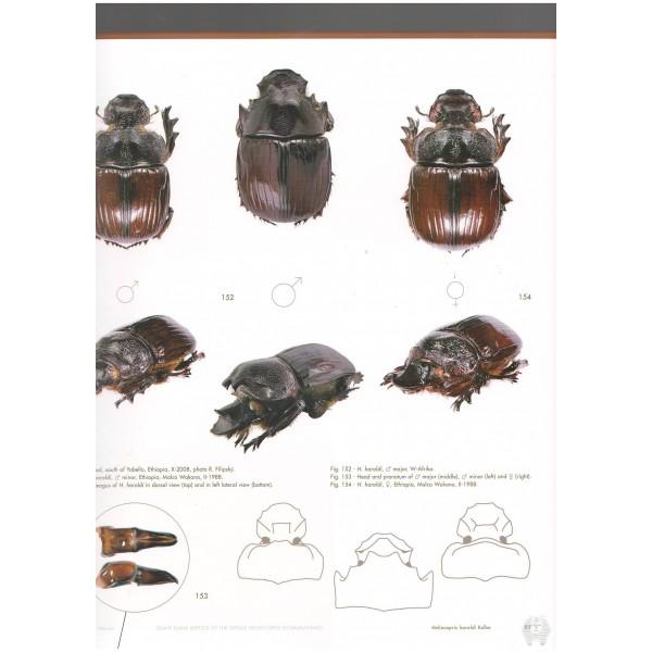 pokornÝ zÍdek werner giant dung beetles of the genus heliocopris