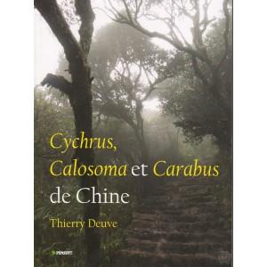http://www.entosphinx.cz/889-1068-thickbox/deuve-t2013-cychruscalosoma-et-carabus-de-chine.jpg