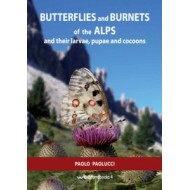 Paolucci P.,2013:BUTTERFLIES and BURNETS of the ALPS and their larvae,pupae and cocoons