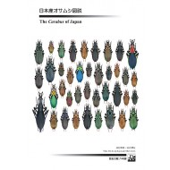 Imura Y.,Mizusawa K.,2013: THE CARABUS OF JAPAN