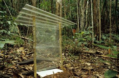 Obr. 2 Intercept poslouží nejvíce, cílíme-li na sběr brouků (Coleoptera)