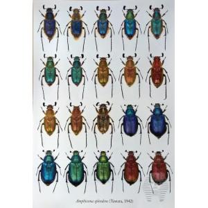 https://www.entosphinx.cz/1347-4350-thickbox/pl03-donacia-aquatica-de-la-republique-tcheque-coleoptera-chrysomelidae-donaciinae.jpg