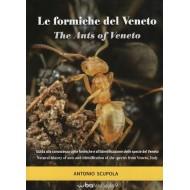 Scupola A., 2018: Le formiche del Veneto