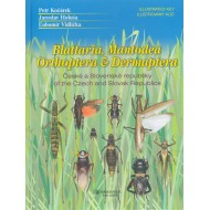 Kočárek P., Holuša J., Vidlička Ľ., 2005: Blattaria, Mantodea, Orthoptera & Dermaptera of the Czech